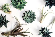 air plants / by Kay Good