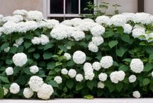 Gardening & Lanscaping Design Ideas / by Candace Tron-Keeler