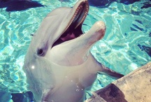 Dolphin is my love