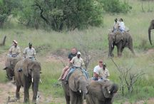 Things to do in around Mabalingwe / Places to visit, things to do and see when you visit Warthog Lodge in Mabalingwe  #SouthAfrica #vacation #bushveld #selfcatering