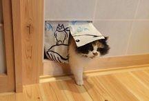 Cats ;u;