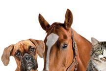 Animali Pet / Una selezione di prodotti speciali per il benessere dei nostri migliori amici!