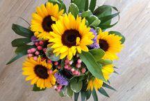 Die Blume der sonne / Blume