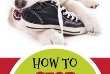 Dog Behavior Information