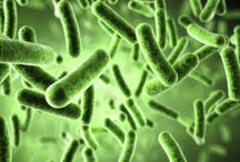 Everything Candida / Candida news, research & recipes