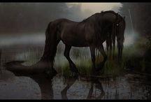 Mythology / by Emily Wujek