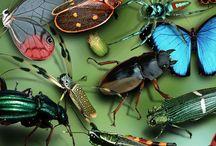 Artrópodes / Artrópodes, especialmente os insetos
