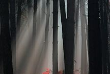 Trees and Forests / by Patricia Girolami