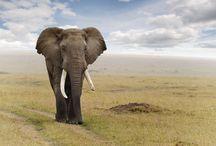Elephant Photo Download   Famous HD Wallpaper