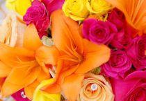 Flowers / by Anita
