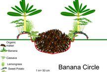 Tropical Edible Garden / Growing veggies, fruits and herbs in zones 9-11