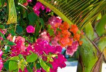 Colours - Tropical