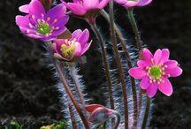 Bunga alami