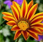 Garten / Balkon / Blumen