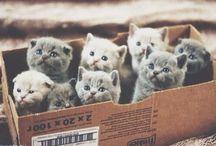 Cicky / cicušky, mačičky
