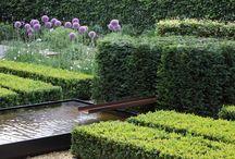 Strakke tuin / Harry Esselink heeft deze tuin omgetoverd tot een stijlvolle strakke tuin.