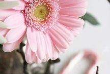 bloemen dio