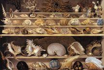 Muszle, muszelki / Shells
