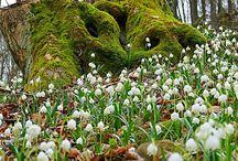 Frühlingsausflug zu den Märzenbechern
