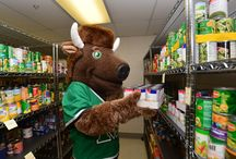 Marco around MarshallU / The adventures of our beloved bison on campus and beyond!