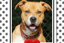 Adoptable Dogs of AAR / Lots of adorable dogs available for adoption at AAR.
