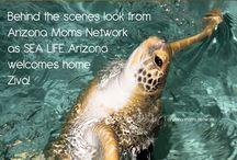Things to do in Arizona / by Arizona Moms Network