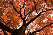 Fall / Love