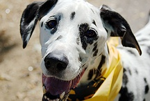For Lenexa's Four-Legged Friends / For a day of fun with your dog, come to Lenexa's Tails on the Trails Pet Festival. Located at Ad Astra pool and park, the event will take place from 9 a.m. to 1 p.m. on Saturday, Aug. 10, 2013. Enjoy pet vendors, pet talent show, dog swims and demonstrations.
