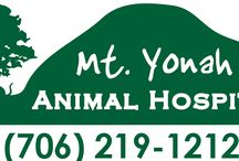 Georgia Veterinarians Who Practice One or More Modalities in Holistic and Integrative Veterinary / http://www.bestcatanddognutrition.com/roger-biduk/list-of-900-u-s-holistic-integrative-veterinarians/