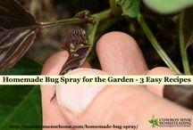 herbal bugs spray