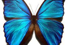 It's BLUE!!! / by DaNella J Auten