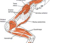 Yoga & anatomy / by A Keys Massage