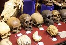 Courses ~ Forensic Anthropology