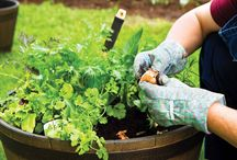 How to Start a Garden – Gardening Tips and Advice