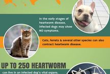 Heartworms-What are they all about?