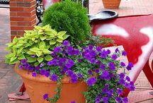 Flower Garden / by Mary White