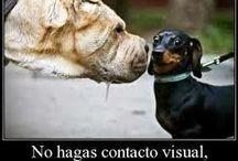 Caninos y más