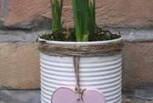 DIY Pflanzen