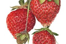 My Fruit:Strawberries