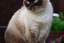 Cats is the beautify