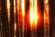 ormanlar ve doga