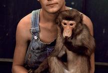 Majom / monkey