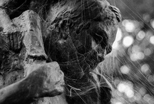 Creepy things / A collection of photography of the creepy nature