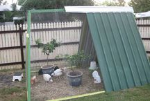 Chicken Coup DIY