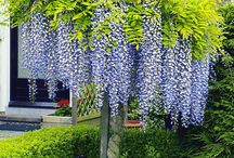 Garten Ideen