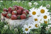 STRAWBERRY'S,and things that go with them. / by Donna ~~~