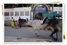 India / by El rinconcito de Zivi Zivi