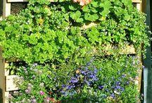 zahrada z palet