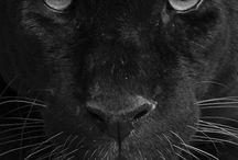 Animal ♥