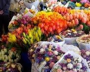 love me some flowers / by Sofia Kenny